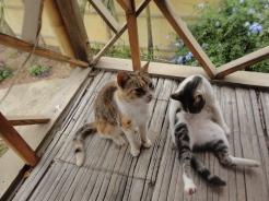 Hosteria Itapoa: Breakfast Cats