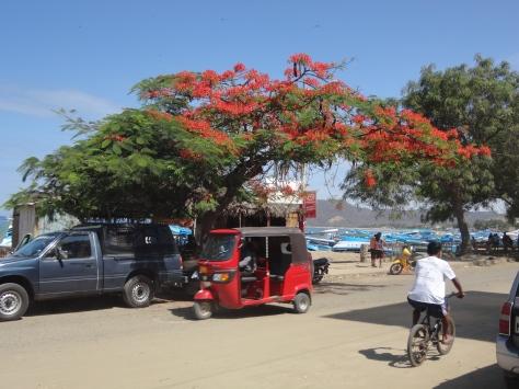 Puerto Lopez: taxi