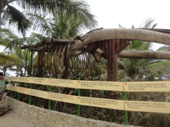 Puerto Lopez: Humpback Whale