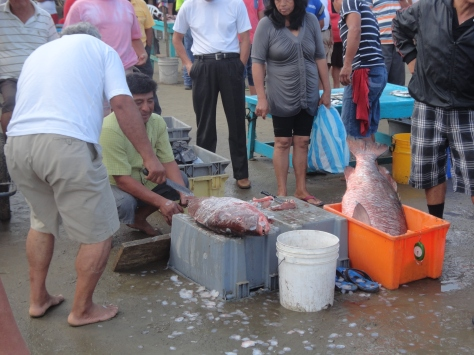 Puerto Lopez: fish cleaning