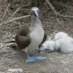 Two Clueless Canadians in Ecuador- Isla de la Plata and Los Frailes